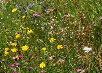 """Blühender Naturpark: Einladung zum """"Forum Bienenweide"""" und zur UN-Auszeichnung"""