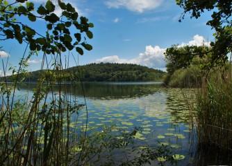 Jubiläumsfeier: 80 Jahre Naturschutzgebiet Mindelsee