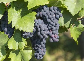 """Einladung zur Tagung """"Terroir.Genuss.Erlebnis: Weinregion Württemberg positionieren"""""""