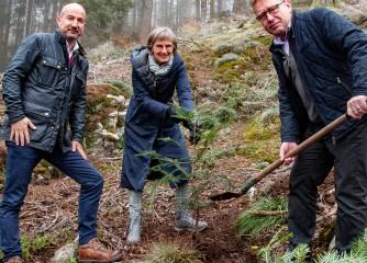 """Schwarzwald Tourismus GmbH startet Aktion """"Bäume statt Karten"""""""