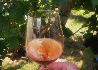 Weinwissen im Weinsüden: Lehrgang zum Assistant Sommelier IHK